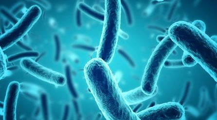 Microbial Fuel Cells: A Promising Energy Source