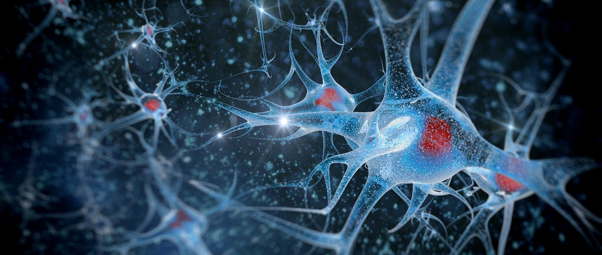 Neuroprotective Effects of Plant Extracts