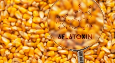 Aflatoxins: A Serious Threat to Human Health